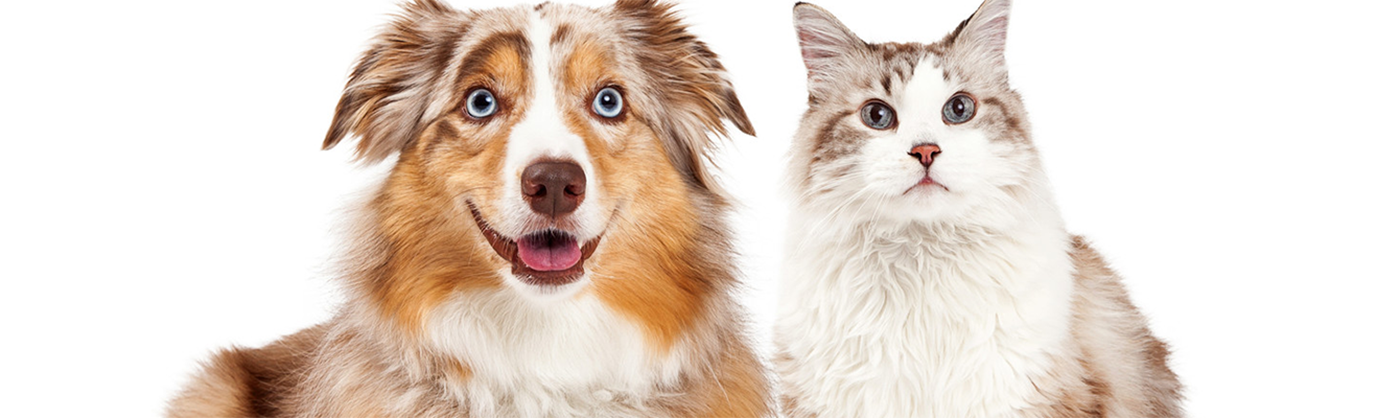 dog-and-cat-page-banner-1400x4001.png