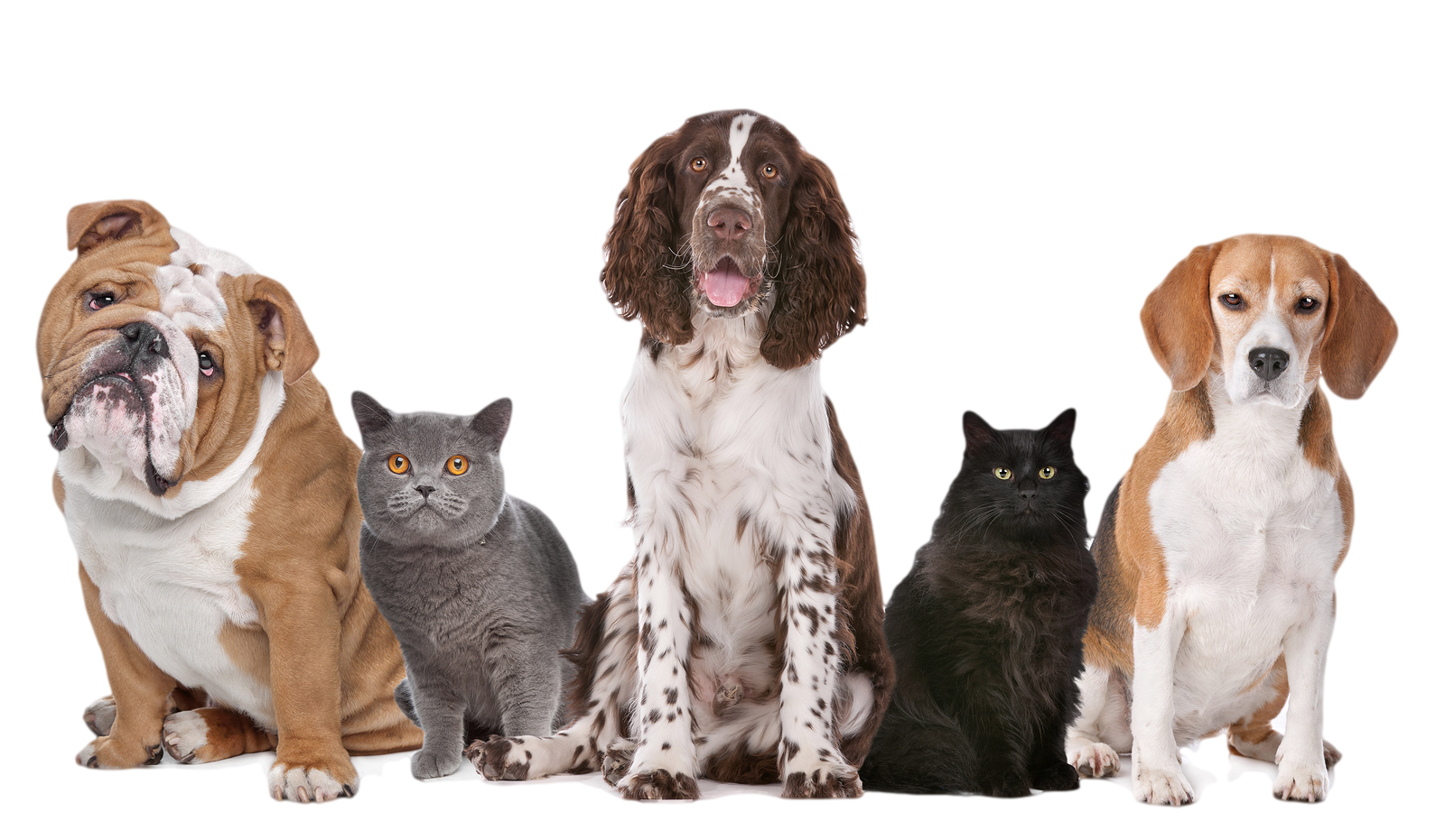 png-hd-dogs-and-cats-dog-png-transparent-image-16001.png