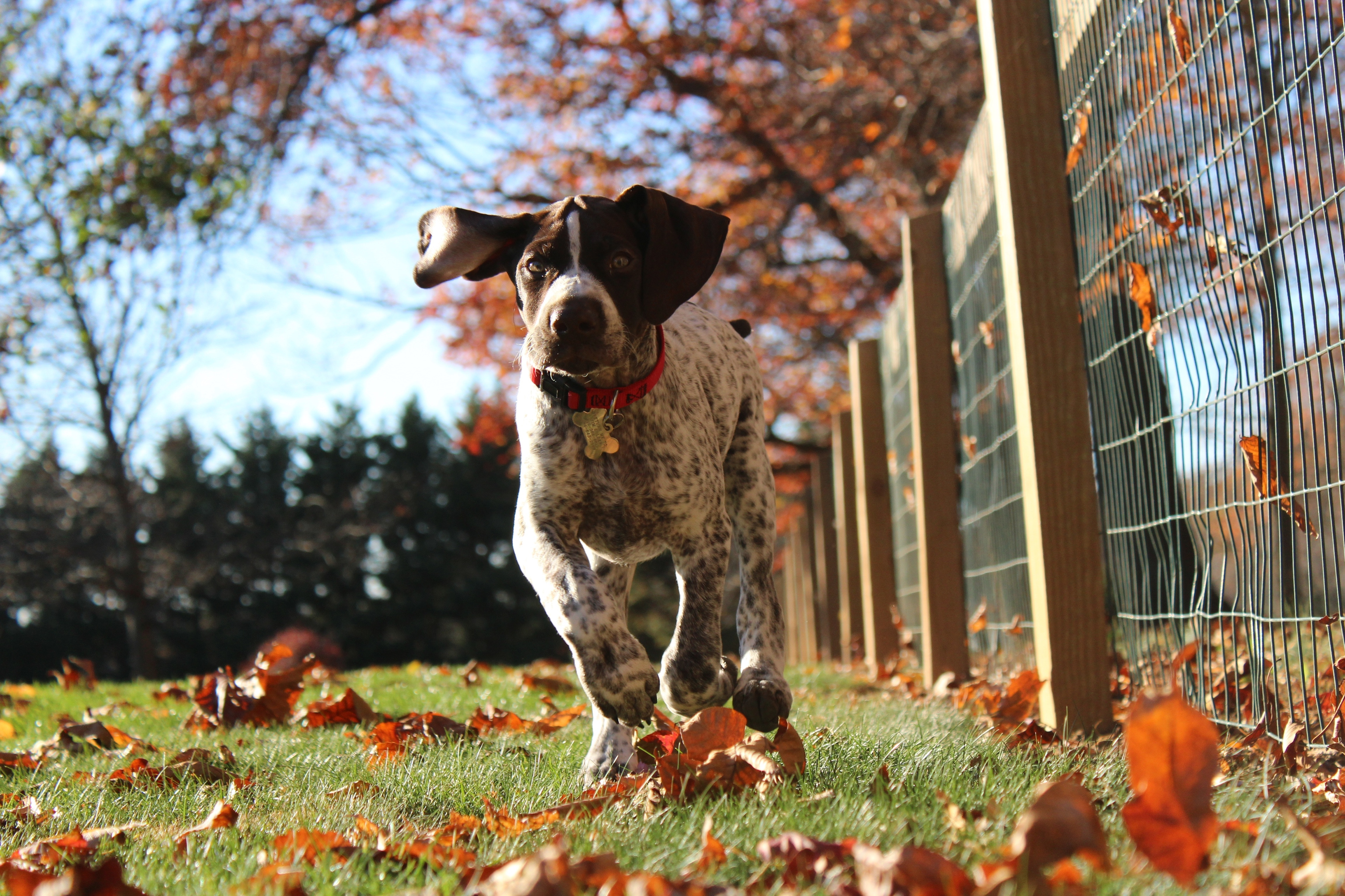 tim-golder-312316-unsplash-autum-pup.jpg
